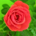 u4832_avatar.jpg